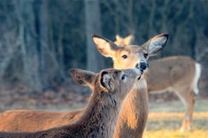 In the News: Hercules Richmond Completes VDOT Deer Fencing Contract