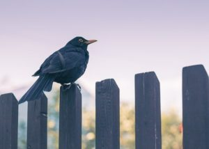 New Year, New Fence: How to Install a New Fence the Right Way