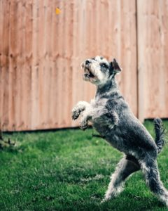 Benefits of a Dependable Backyard Fence