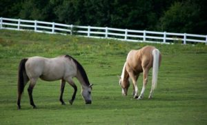 3 Common Styles of Horse Fencing