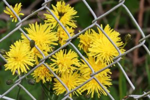 Unique Ways to Decorate a Chain Link Fence
