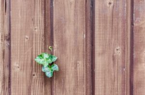 Wood Fence Maintenance: Tips for Proactive Homeowners