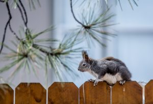 Residential Fence Maintenance: Getting Ready for Fall