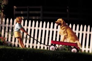dog-fence