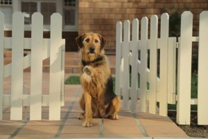 Dog Friendly Fencing
